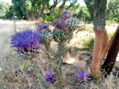 Miele italiano della Sardegna cardo